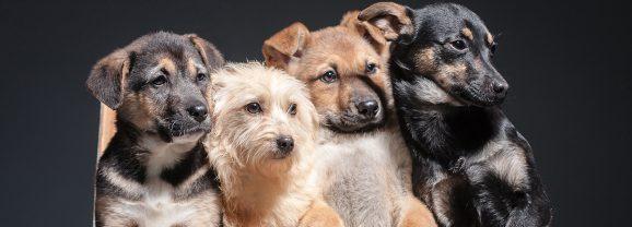 Shelter Hope Pet Shop Celebrates 5th Anniversary