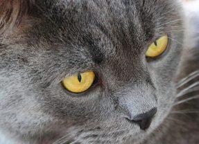 Charity Pop-up Art Show Benefitting LA's Homeless Kitties