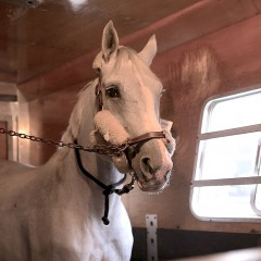 The Best Indoor Equestrian Show on Earth Comes to LA