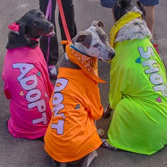 Race for the Rescues on October 24th