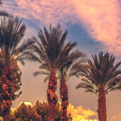 Palm Desert First Weekends