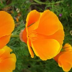 Descanso Gardens Celebrates Earth Day