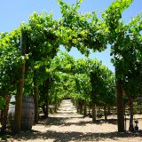 Discover the Temecula Valley ~ The Southland's Premier Wine Country