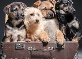 Oxnard Shores Day of the Dog