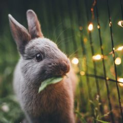 'Hop' Over to The Collection at RiverPark for Bunny Photos