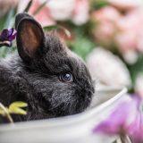 Easter Bunny Bungalow at The Promenade at Westlake