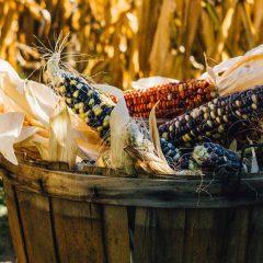 Harvest Festival® Original Art & Craft Show