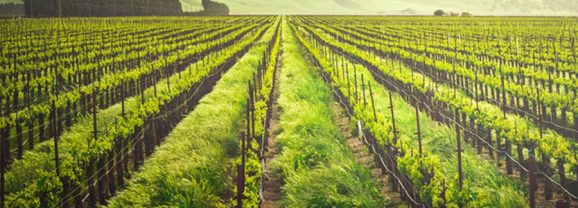 Family Comes First at These SoCal Wineries